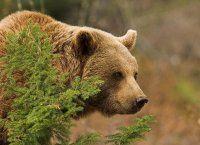 Rencontre avec ours